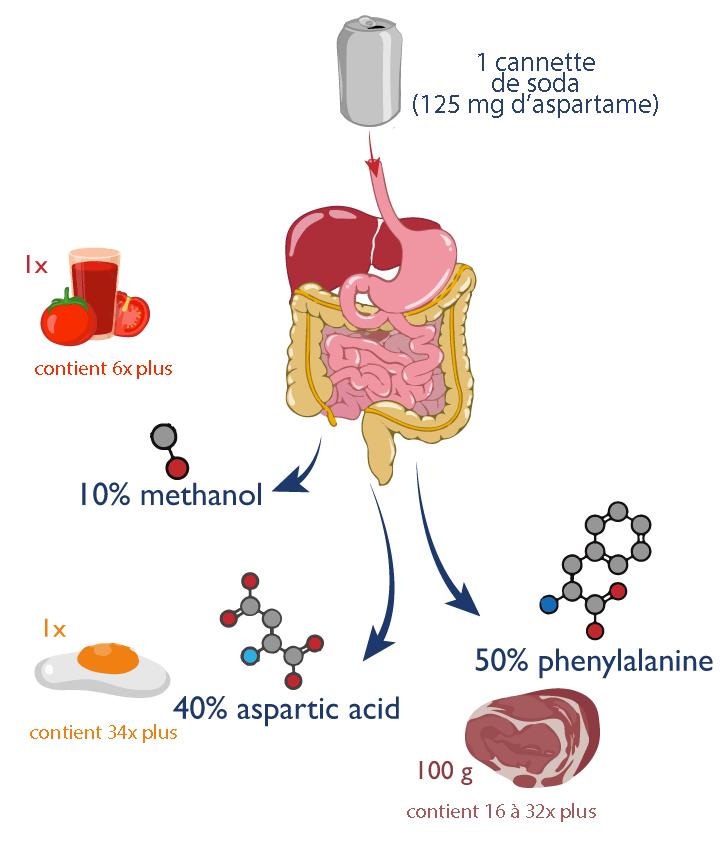métabolisme et aspartmae